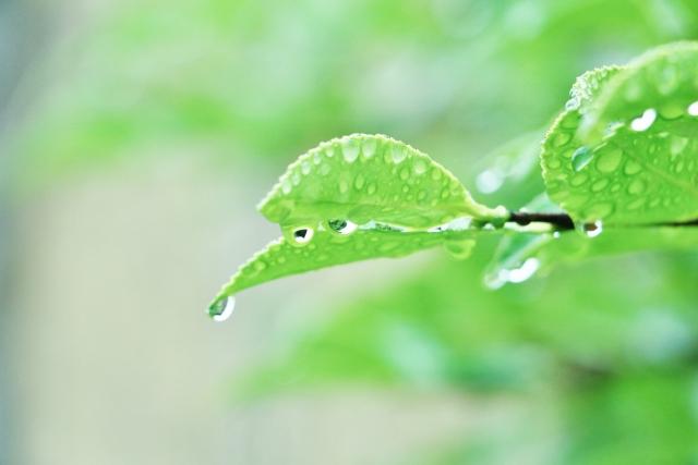 ウーバーイーツの配達は雨の日が稼ぎ時